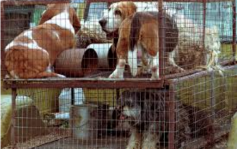 What would make you care about puppy mills