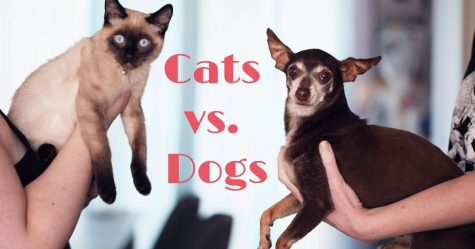 Cats Vs. Dogs, which is better?