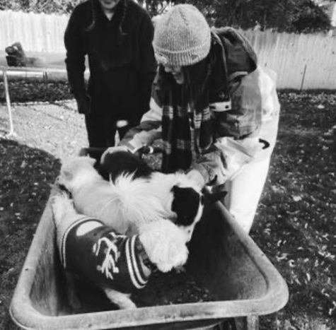 3 dogs inside of a wheelbarrow with two people